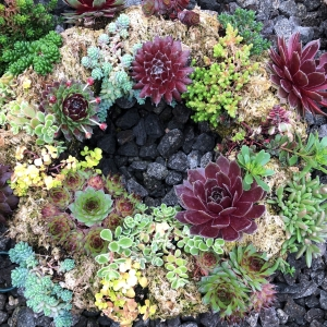 Living Succulent Wreath – (12″ Frame)