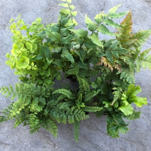 Hardy Fern Collection – Mark's Favorites
