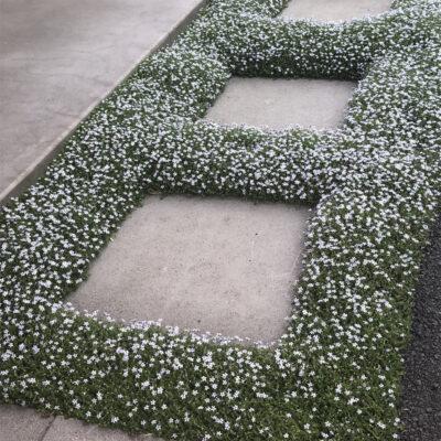 Foot Traffic Perennials™